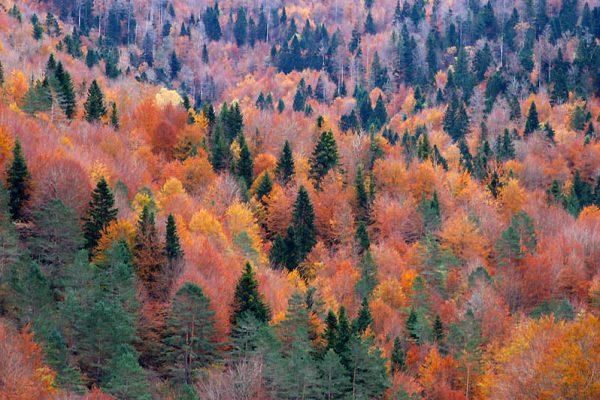 bosque-Irati-super-otoñal